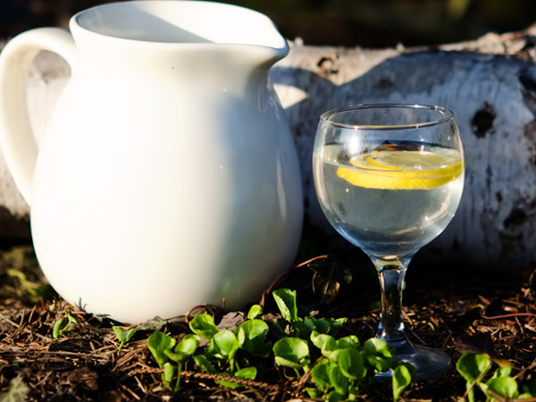 Как добывать березовый сок и что с ним делать