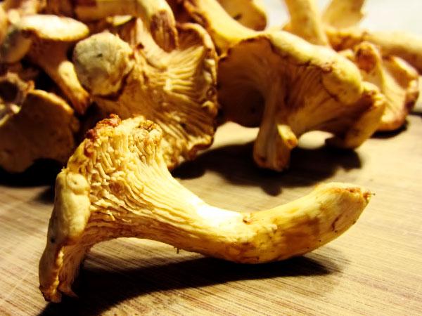Очищаем грибы от лесного мусора