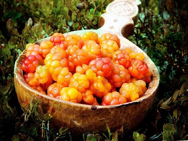 календарь сбора лесных ягод