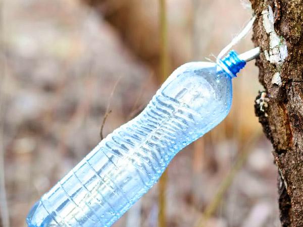 фото вытекающий берёзовый сок в бутылку
